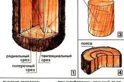 Строение и свойства древесины